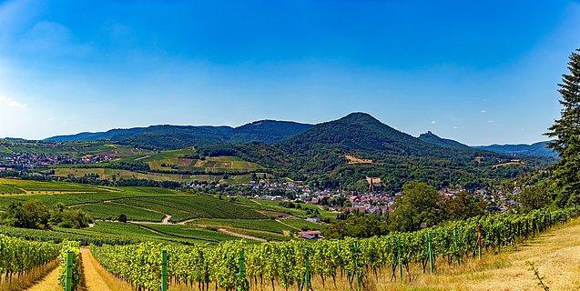 Blick oberhalb Weinberge