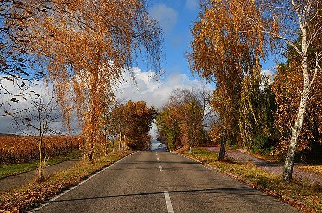 Der Weg zum Castell - Leinsweiler